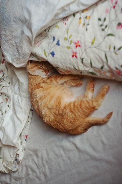 kitten via Pinterest