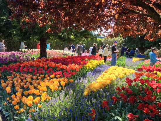 Skagit Valley Tulip Festival in Mount Vernon, WA