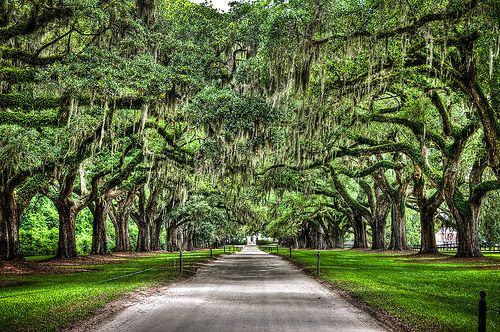 Charleston South Carolina American Road trip