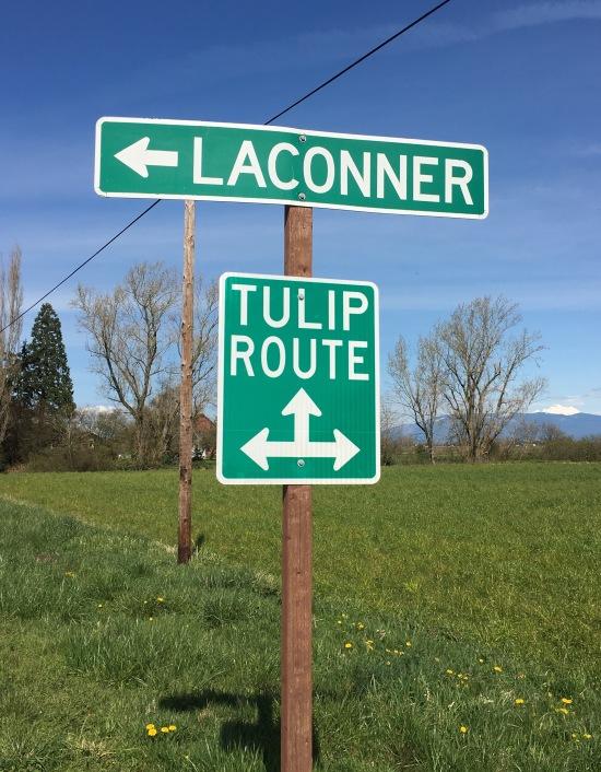 Tulip Route, Skagit Valley Tulip Festival