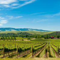 5 Summer Road Trips Around the Pacific Northwest