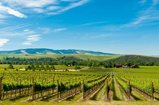 5 Weekend Road Trips Around the Pacific Northwest // Washington Wine Country